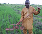 Pascal Gbenou with SRI weeder in Benin