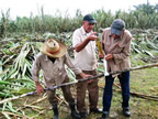 Measuring the sugarcane in Bahia Honda